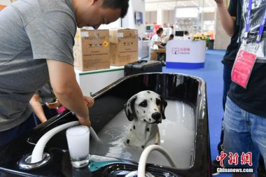 Chinese are now spending much more on pets, says report