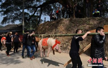 First African swine fever cases reported in Beijing