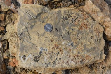 World's earliest fossilised flower excavated in east China