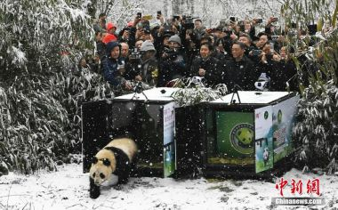 Two pandas released into the wild after being raised in captivity