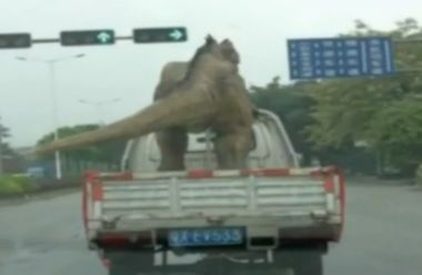 Dinosaur catches a ride in China