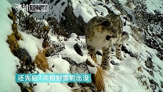 First footage of leopard captured in Chinese giant panda reserve