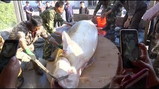 Giant sturgeon caught in northeast China river