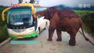 Wild elephant attacks tour bus in southwestern China