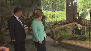 Xi Jinping attends opening ceremony of panda garden in Berlin Zoo