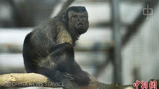 Monkey with 'human face' goes viral in China