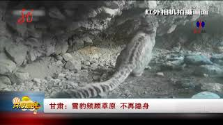 Snow leopard and 3 cubs filmed for first time at Chinese nature reserve
