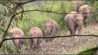 Ten wild elephants invade village in southwest China, causing panic